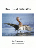 Birdlife of Galveston